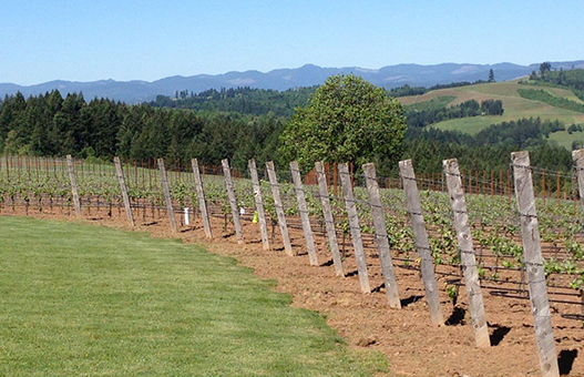 Eminent Domaine Ribbon Ridge Estate Vineyard | Pinot Noir